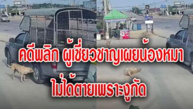 Photo of คดีพลิก ผู้เชี่ยวชาญงู เผยน้องหมาไม่ได้ตาย เพราะถูกงูกัด