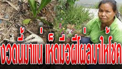 Photo of เจ้าของบ้านเชื่อมาให้โชค เห็ดมือผี โผล่ใต้ศาลพระภูมิ